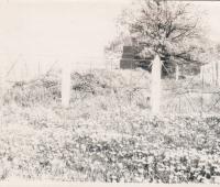 graves_gruber_1950