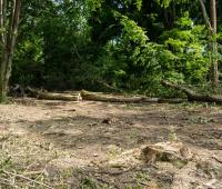 Агролес зачистил большую часть территории вокруг братской могилы