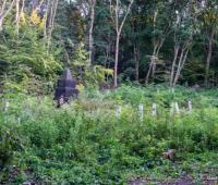 Общий вид территории памятника. После того как обрезали деревья и вывезли их, эта территория смотрится куда лучше... но все же...
